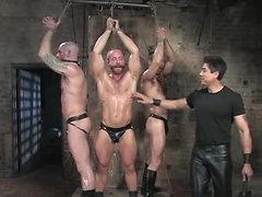 Van has his hands full in the dungeon with three dirty pigs, Tober Brandt, Kurt Weber, and Xavier St-Jude.